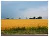 Somonauk v.3 (John Lamont1) Tags: leica digilux2 midwest illinois farmcountry