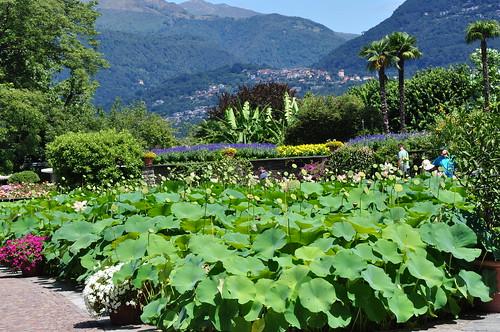 Landscape & Lotus