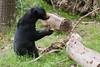 Rhenen - Ouwehands Zoo 2017-8506 (Quistnix!) Tags: 2017 ouwehandszoo dierenpark zoo