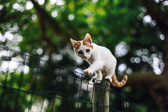 Fency Cat (ewitsoe) Tags: kitten cat feline hff fencefriday fence friday france paris fenced cute adorable canon ewitsoe street erikwitsoe crazy kittens cats house pet trees summer aprk french