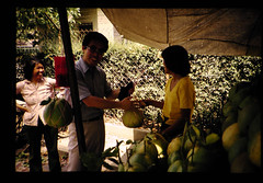 Studies On The Ruminat Physiology In Malaysia = マレイシアにおける反すう家畜の栄養生理 (JIRCAS) Tags: マレイシアにおける反すう家畜の栄養生理 マレーシア 野菜生産 生活(風俗・習慣) 情報 cameronhighland null malaysia
