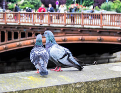 From Paris With Love (mikederrico69) Tags: bird birds animal feathers bridge love paris europe trip vacation pigeons summer kiss romantic