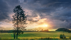 Askim, Norway 0312 - Lonely Tree at Sunset (IP Maesstro) Tags: lonely tree landscape sunset sunrise norway askim nature hdr sony ipmaesstro
