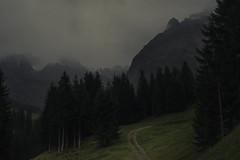 Valley of Wildenbach (Netsrak) Tags: berge gebirge bäume alpen kleinwalsertal schnee nebel mist fog natur