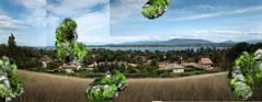 villas (sacha.bs) Tags: léman genève quiet villas bacteria