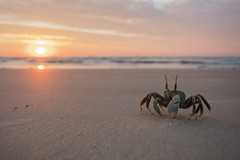 Ghost Crab Wide Angle (Daniel Trim) Tags: ocypode ghost crab beach sunset morondava wide angle madagascar travel africa african nature wildlife animals photography