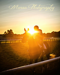 (EASY GOER) Tags: horseracing belmontpark horse racing sports equine thoroughbreds thoroughbred horses ny newyorkstate sportofkings canon 5d mark iii races 5dmarkiii