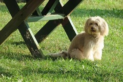 Cute and Fluffy (caboose_rodeo) Tags: 8129 dog somebodyelsesdog pinkneyparkrowaytonct norwalkct