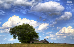 Nature Versus Man (DetroitDerek Photography ( ALL RIGHTS RESERVED )) Tags: allrightsreserved farm house collapse damaged dilapidated abandoned decay blight bleak ruin tree sky usa midwest michigan thumb rural field detroitderek september 2017 hdr 3exp canon 5d mkii economy digital eos steelydan album title
