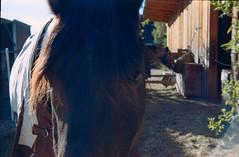 Joy (skorzak.E.T.) Tags: retinette kodak kodakgold kleinbild film frühling analog pferd horse tirol tyrol animal tier spring