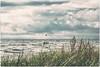 Kitesurfer im Visier (MNaumi) Tags: kitesurfing meer fuji fujixt1 möwe balticsea ostsee