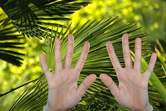 Palms (swong95765) Tags: palm hands palms fronds bokeh nature life evolution evolved