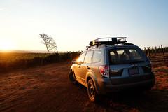 2012 Subaru Forester 2.5x (donaldgruener) Tags: subaruforester subaru forester sh 2012 25x offroad northerncalifornia vineyard