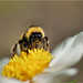 Being+a+BumbleBee+%232