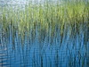 somehow or other (vertblu) Tags: pond pondlife pondscene pondsurface bythepond blue bluewater green greens ripples rippling movingwater water watersurface waterabstract natureabstracted nature abstractnature abstract abstrakt abstractfeel abstraction abstractreflections almostabstract semiabstract abstractlandscape abstracted horsetails horsetailsinapond reflectedhorsetails spring springtime schachtelhalm pattern patterns patterning reflection reflections reflectedskies reflectedlight mirroring mirrored bluegreen distorted distortion scribbles naturalscribbles lines linien graphical graphic tangle wirrwarr vert vertical vertblu grün hellgrün