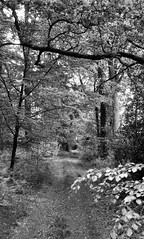 From the Shire to Bree (Rosenthal Photography) Tags: 20170601 ilfordhp4 ff135 weg landschaft städte olympustrip35 anderlingen bw wald 35mm analog asa125 dörfer siedlungen path track nature landscape trees mood blackandwhite olympus olympus35 trip35 40mm ilford hp4 hp4plus epson v800
