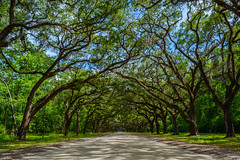 Southern Gem (Brandon Westerman WNP) Tags: wormsloe historic site state park savannah georgia south southern gem road tree trees live oak beautiful scenery scenic scenicnature nature natureandnothingelse natur nikon d3200