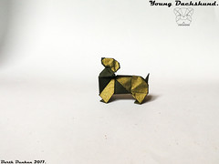 Young Dachshund - Barth Dunkan (Magic Fingaz) Tags: anjing barthdunkan chien chó dog hond hund köpek origami origamidog perro pies пас пес собака หมา 개 犬 狗