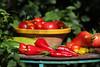 CKuchem-5557 (christine_kuchem) Tags: bauerngarten biogarten bioqualität ernte erntezeit fleischtomate garten gemüse gemüsegarten grün gurke nutzgarten paprika peperoni pflanze rarität sommer sorte sorten sortenvielfalt tomate vielfalt zucchini bio biologisch frisch gelb gesund lecker natürlich orange reif rot selten unbehandelt