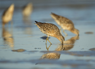 Dowitcher Symmetry