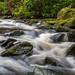 Watercourse Killarney Nationalpark