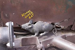 Beware Guard Rat