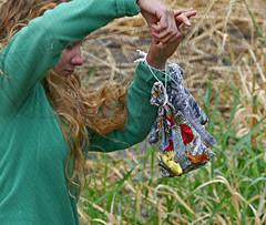Retrieving a Warbler from a Mist Net (Colorado Sands) Tags: bird sandraleidholdt colorado wilsonswarbler wildlife coloradowildlife tagging retrieving net barrlakestatepark wildlifeconservation birdbag usa mistnet