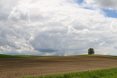 The lonely tree (Xtraphoto) Tags: tree baum felder field lonely eiche oak landscape landschaft sky clouds wolken