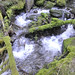 Olympic Mountain Dreams day  3 -  White water through green moss