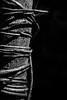 Held Tight (belleshaw) Tags: blackandwhite sandiegobotanicgarden nature jungle vine tree constrictor wrapped strangled spiderwebs silk strands wood plant detail coiled bokeh
