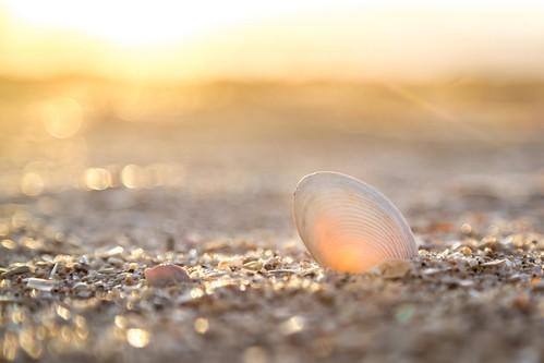 Sunset Shell 1