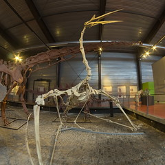 Quetzalcoatlus (tortipede) Tags: sony a58 museum dinosaur lamuséedesdinosaures esperaza espéraza esperasan france frança miègjorn midi occitània fromraw rawtherapee samyang 8mm fisheye