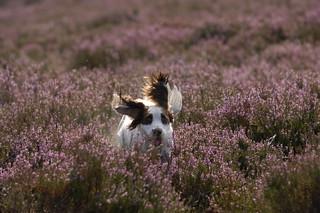 Scotland Bird Hunting 4