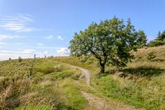 DSC_0094 - Near Crown Point, Burnley (SWJuk) Tags: swjuk uk unitedkingdom gb britain england lancashire burnley home crownpoint dunnockshaw dunnockshawcommunitywoodland moorland moors path footpath trail tree fence bluesky clouds 2017 aug2017 summer nikon d7100 nikond7100 tokina1116 wideangle rawnef lightroomcc landscape