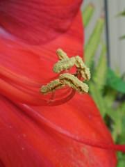macro (jakza - Jaque Zattera) Tags: semente polen vermelho
