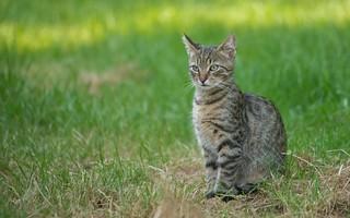 kittens (48)