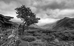 Llanberis 1 (Ade G) Tags: bw landscape wales mountains plants slate trees