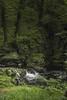 Watersmeet-TheAngler-2-LR (Frank Etchells) Tags: water river devon watersmeet nationaltrust nt