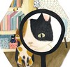 What a pdd view with this magnifying glass (mhasegawa165) Tags: cat readingglass glass magnifyingglass honeybee bee hexagon honeycomb story painting watercolor illustration