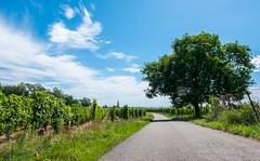 Scherwiller (TotoFABRE) Tags: scherwiller alsace france vignes wine vin sky clouds fujifilm xm1 fuji road summer 2017