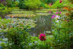 Claude Monet's water lily pond (julesnene) Tags: canon canon7dmark2 canon7dmarkii canonefs1755mmf28isusm claudemonet flower france giverny juliasumangil monet nymphéas commune flowers garden julesnene nature pond travel water waterlilies waterlilypond normandie fr travelgirljulia