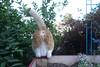 Ziggy Cat - Box Funny Business 6-1-17 13 (anothertom) Tags: cats ziggycat yard outside gardenbox observing watchtower yardpatrol funnycat butt belly cattail jumpdown funnyface sonyrx100ii 2017