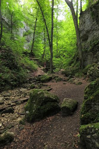 Ruine Fürstenstein_05