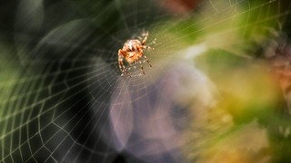 Spider from out of space