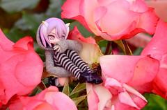 Roses (AeroHail) Tags: toyphotography busoushinki 武装神姫 パーティオ busou shinki partio