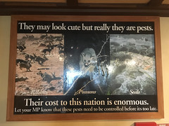 A framed public service announcement at the Stewart Island pub