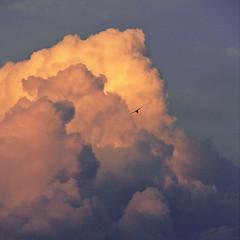 C l o u d s & B i r d (ce_lia95) Tags: sonycybershot sonydsch1 camera capture picture photo photographie shot nature light scene moment clouds bird orange pink bluesky shadow bigcloud sun sunset sky