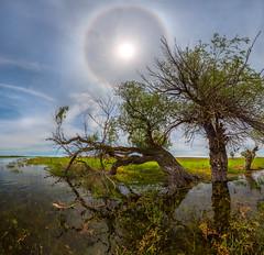 History, how trees carried the halo. (fedorlashkov) Tags: spring river astrakhanregion trees sunhalo willow sun travel