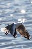 Rokkitboy-1375.jpg (Rokkitboy) Tags: woodbridgeisland birding rokkitboycreativelabs