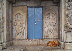 GOD IS ASLEEP. SO ARE THE GUARDS... (GOPAN G. NAIR [ GOPS Photography ]) Tags: gopsorg gops gopsphotography gopangnair gopan photography god gods dwarapalak dog guard temple india